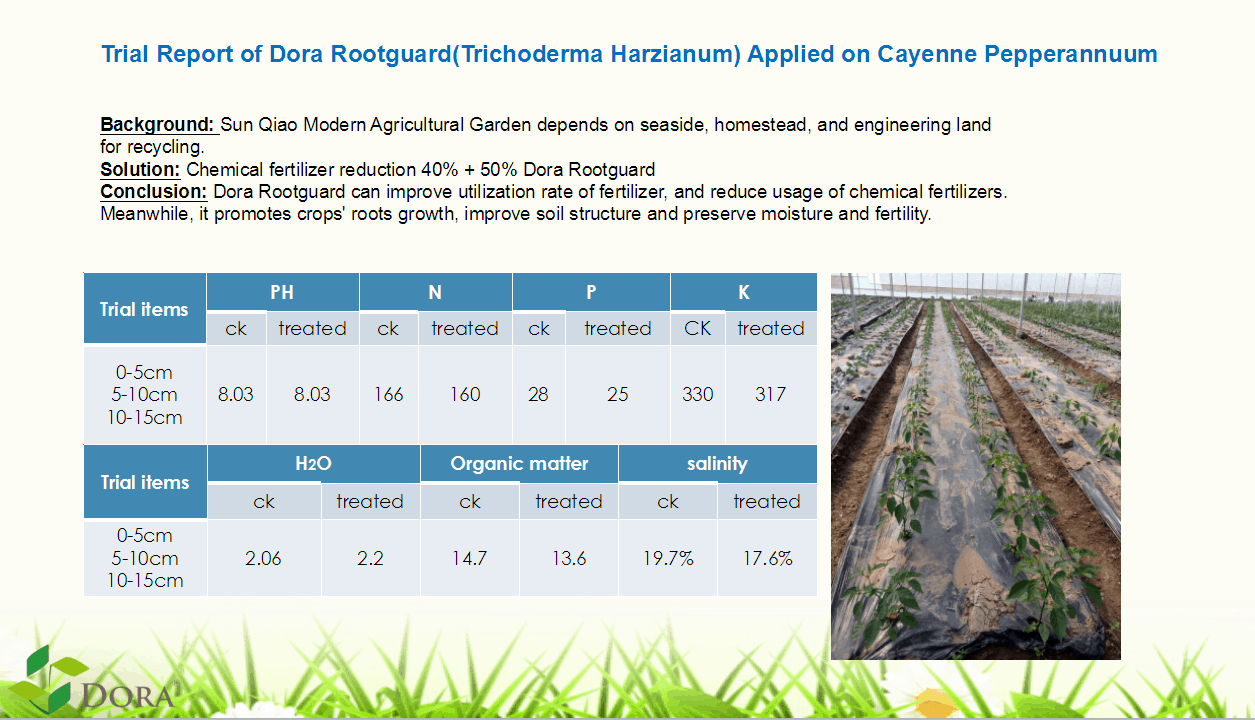 Trichoderma harzianum + humic acids