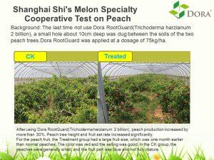 alleviating soil salinity