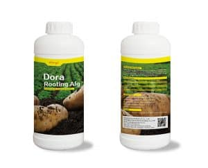 Root Growth Fertilizer