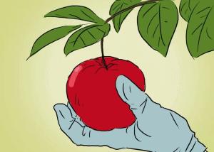 how-to-grow-an-apple-tree-3