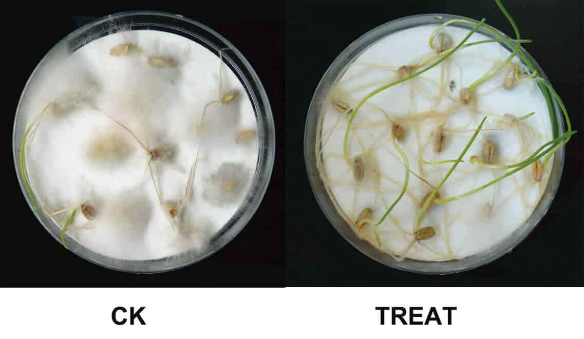 chitosan seed treatment