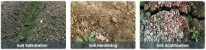 Improve soil condition and root growth