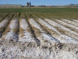 Alleviate Soil Salinization