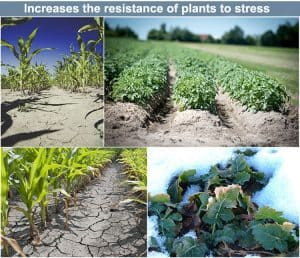 Increase plants resistance ability