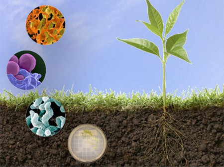 Microbes in soil