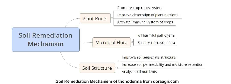 Soil remediation mechanism trichoderma