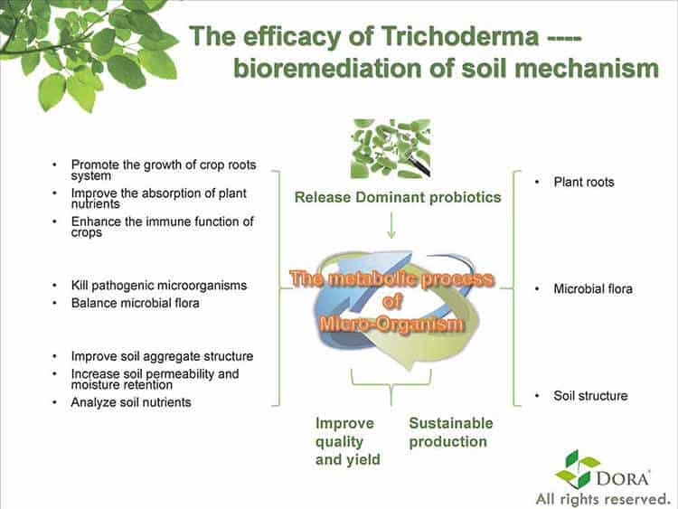 Trichoderma principle
