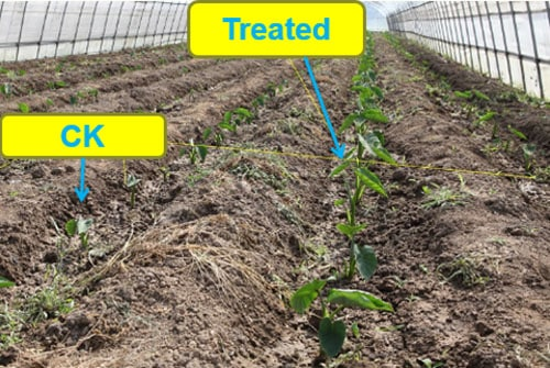 alleviate soil salinity
