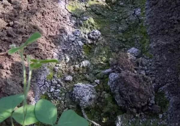 soil problem soil salinization