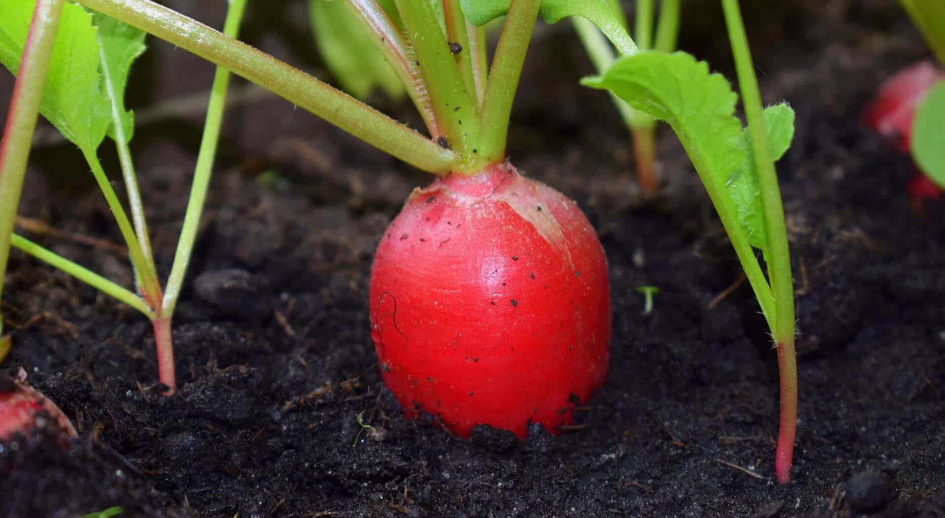 how to fix root rot