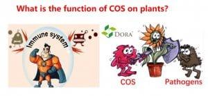 chitosan oligosaccharide use