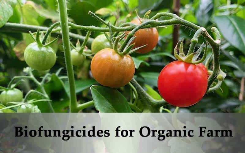 biofungicides