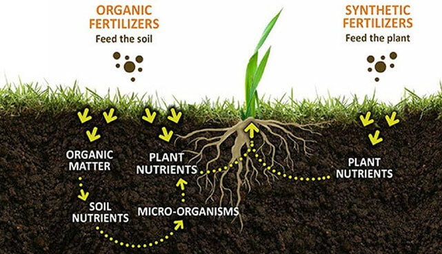 Organic matter for lawn